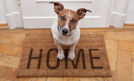 Pet on Door mat | J/K Carpet Center, Inc
