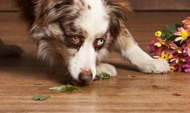Dog on Hardwood floor   J/K Carpet Center, Inc
